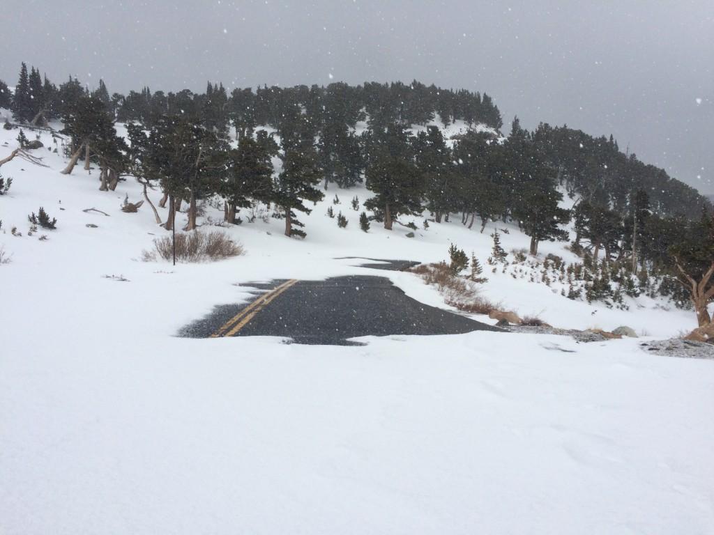 Windswept road