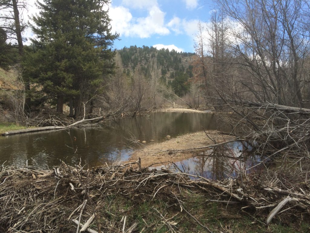Middle Boulder Creek Beaver Dam